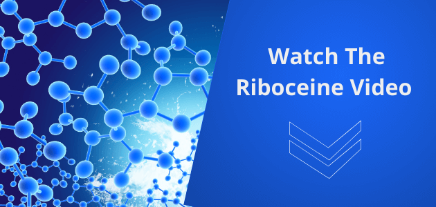 Watch the Riboceine video