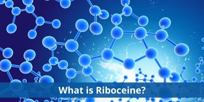 Riboceine molecule
